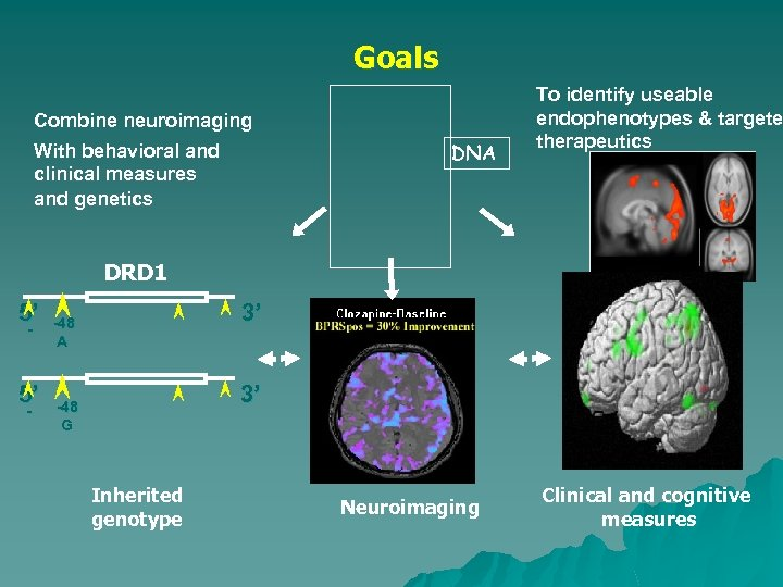 Goals Combine neuroimaging DNA With behavioral and clinical measures and genetics To identify useable