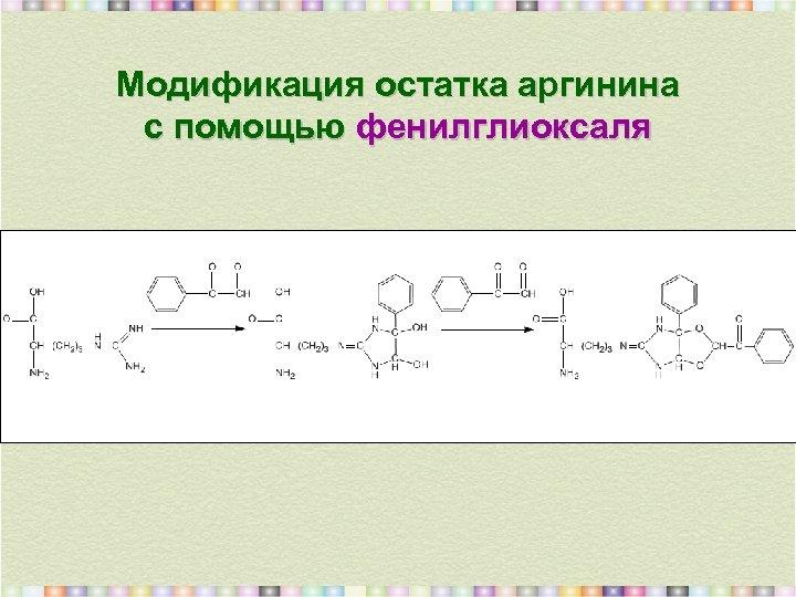 Модификация остатка аргинина с помощью фенилглиоксаля