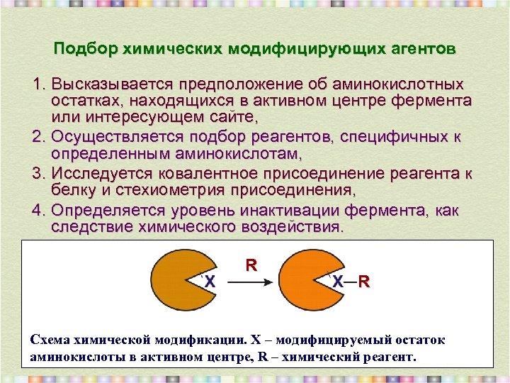 Подбор химических модифицирующих агентов 1. Высказывается предположение об аминокислотных остатках, находящихся в активном центре