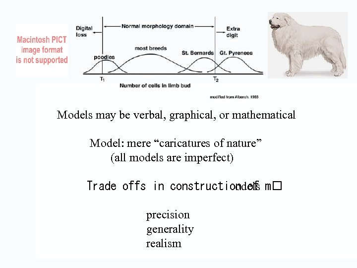 """Models may be verbal, graphical, or mathematical Model: mere """"caricatures of nature"""" (all"""