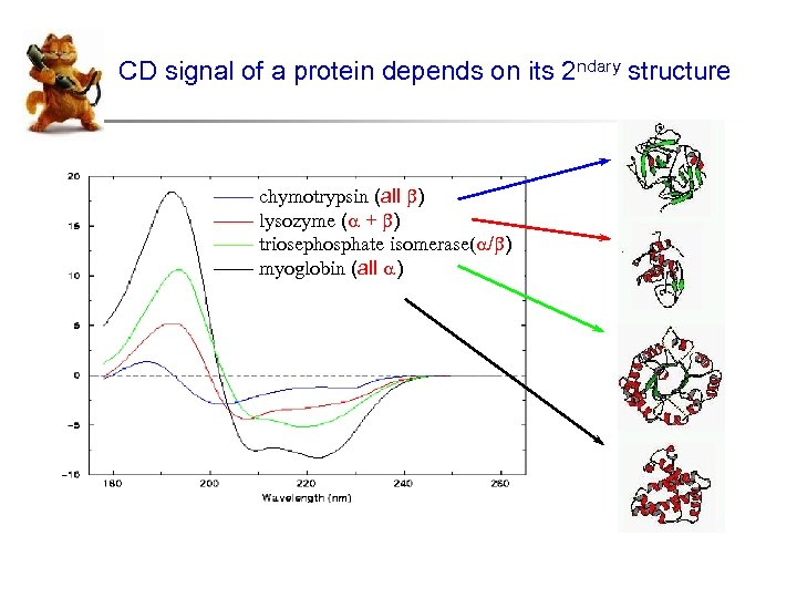 CD signal of a protein depends on its 2 ndary structure —— chymotrypsin (all