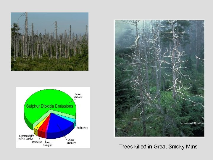 Trees killed in Great Smoky Mtns