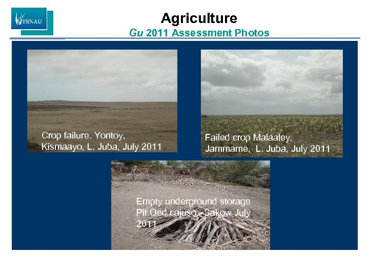 Agriculture Gu 2011 Assessment Photos Crop failure. Yontoy, Kismaayo, L. Juba, July 2011 Failed