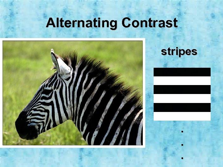 Alternating Contrast stripes . . .