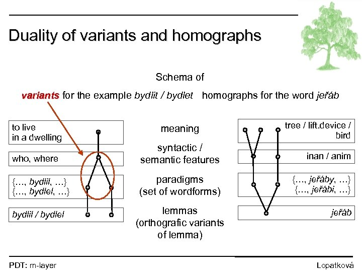 Duality of variants and homographs Schema of variants for the example bydlit / bydlet