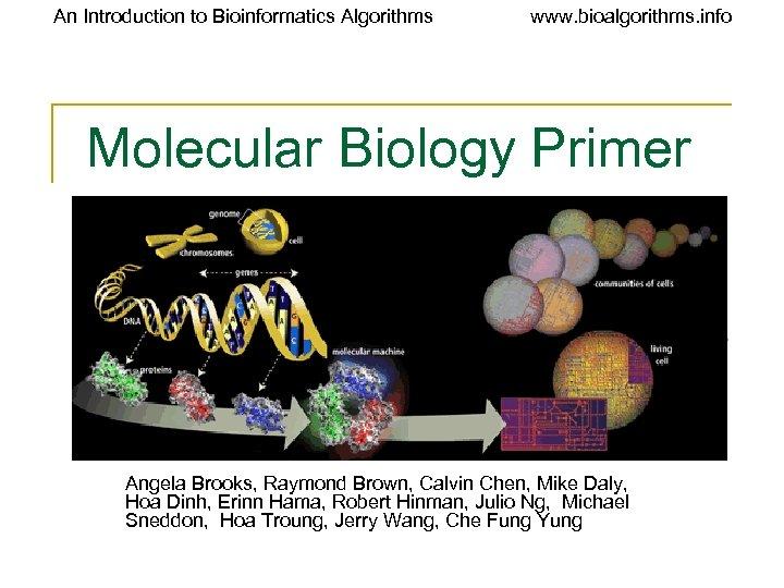 An Introduction to Bioinformatics Algorithms www. bioalgorithms. info Molecular Biology Primer Angela Brooks, Raymond