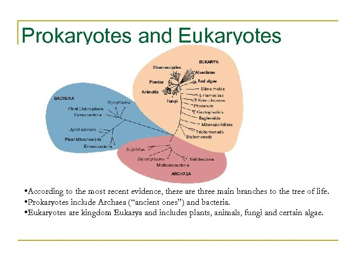 Prokaryotes and Eukaryotes • According to the most recent evidence, there are three main