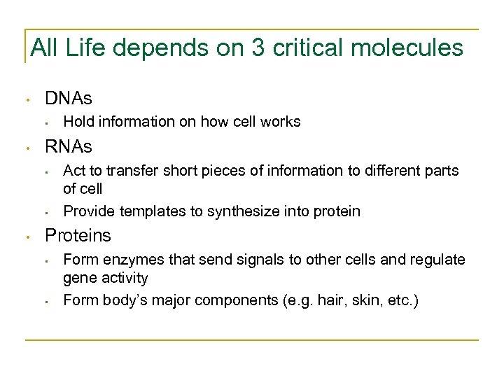 All Life depends on 3 critical molecules • DNAs • • RNAs • •