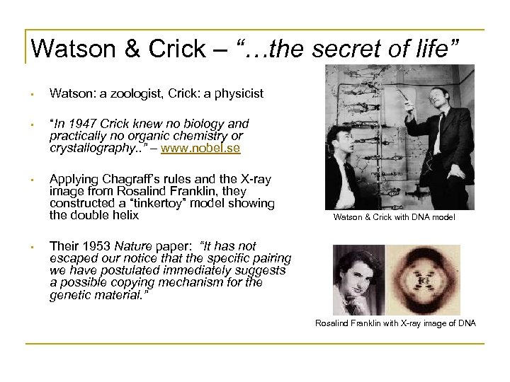 "Watson & Crick – ""…the secret of life"" • Watson: a zoologist, Crick: a"