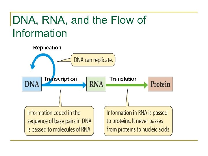 DNA, RNA, and the Flow of Information Replication Transcription Translation