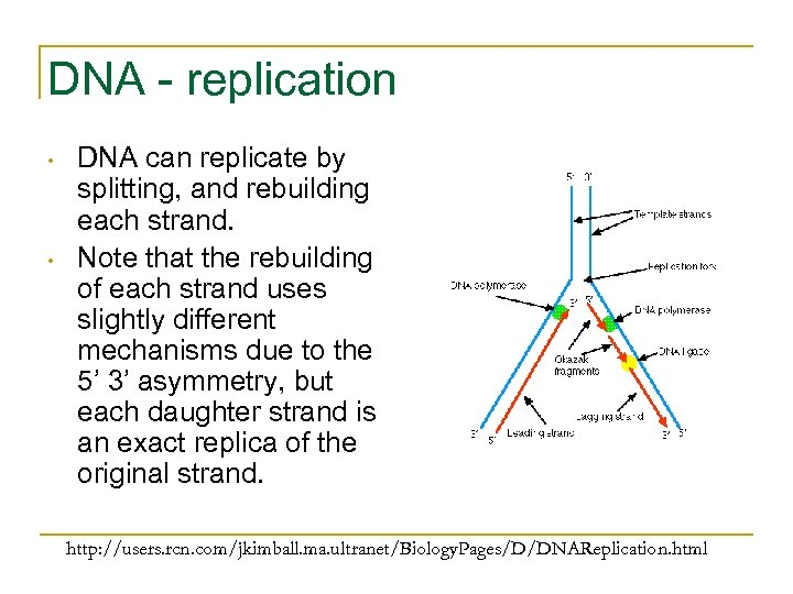 DNA - replication • • DNA can replicate by splitting, and rebuilding each strand.