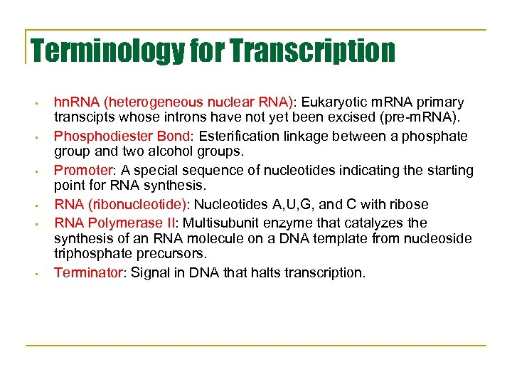 Terminology for Transcription • • • hn. RNA (heterogeneous nuclear RNA): Eukaryotic m. RNA