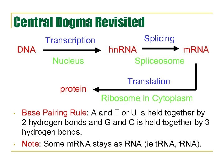 Central Dogma Revisited DNA Transcription Nucleus protein • • Splicing hn. RNA m. RNA