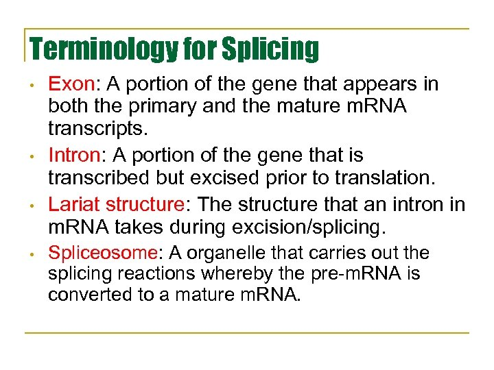 Terminology for Splicing • • Exon: A portion of the gene that appears in