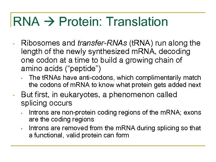 RNA Protein: Translation • Ribosomes and transfer-RNAs (t. RNA) run along the length of