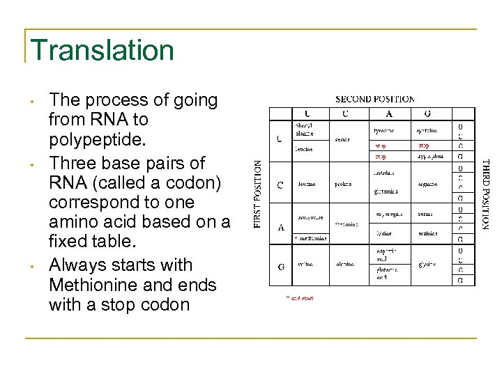 Translation • • • The process of going from RNA to polypeptide. Three base