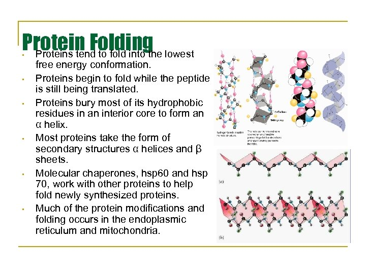 Protein Folding lowest Proteins tend to fold into the • • • free energy