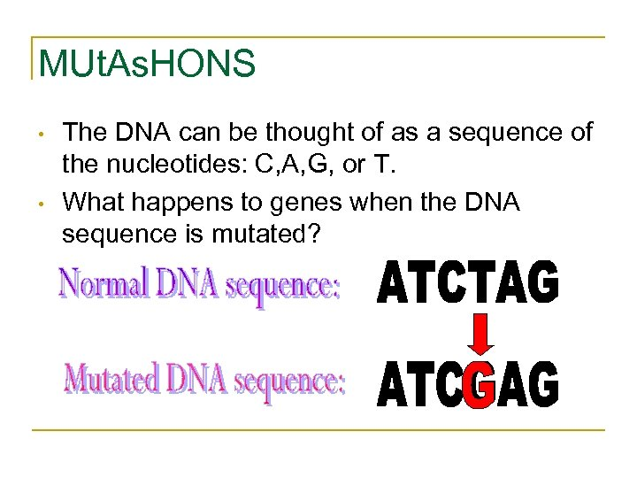MUt. As. HONS • • The DNA can be thought of as a sequence
