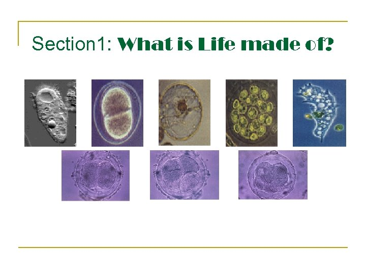 Section 1: What is Life made of?