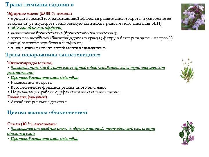 Трава тимьяна садового Эфирное масло (20 -55 % тимола) • муколитический и отхаркивающий эффекты: