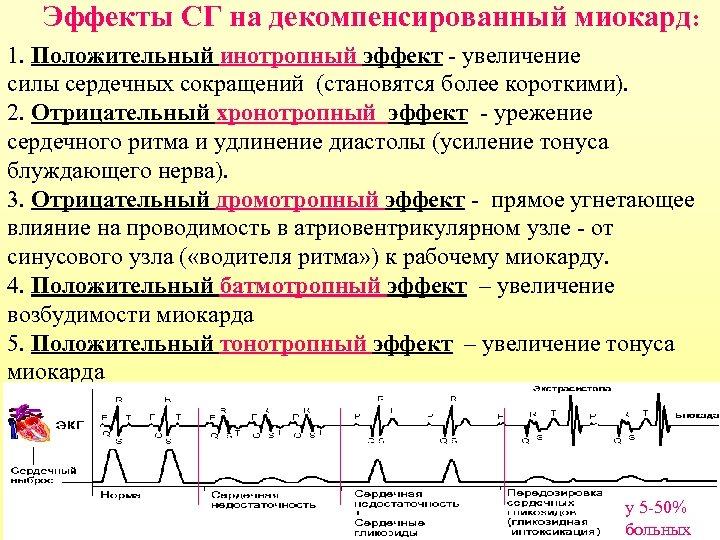 Эффекты СГ на декомпенсированный миокард: 1. Положительный инотропный эффект - увеличение силы сердечных сокращений