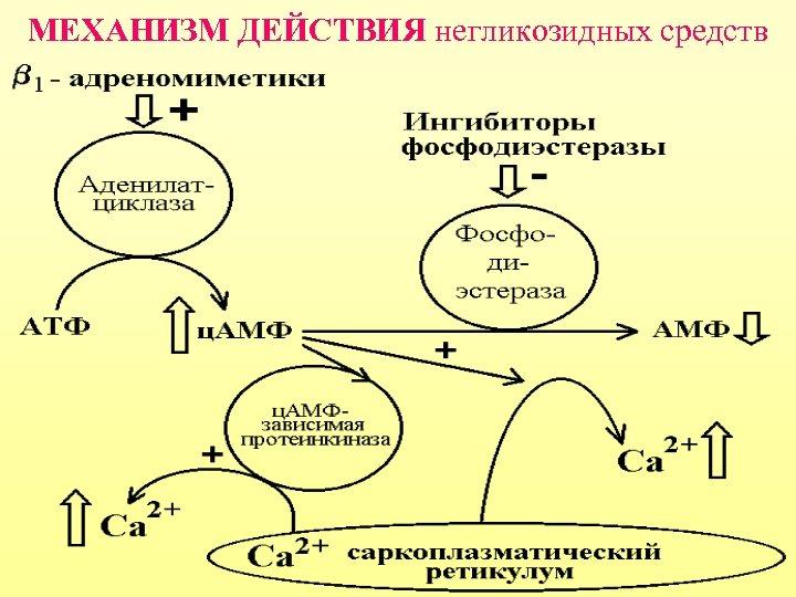 МЕХАНИЗМ ДЕЙСТВИЯ негликозидных средств