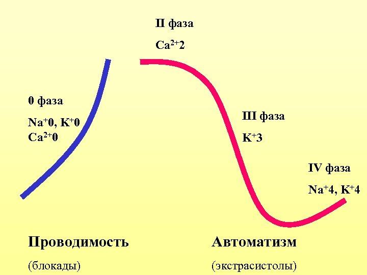 II фаза Ca 2+2 0 фаза Na+0, K +0 Ca 2+0 III фаза K