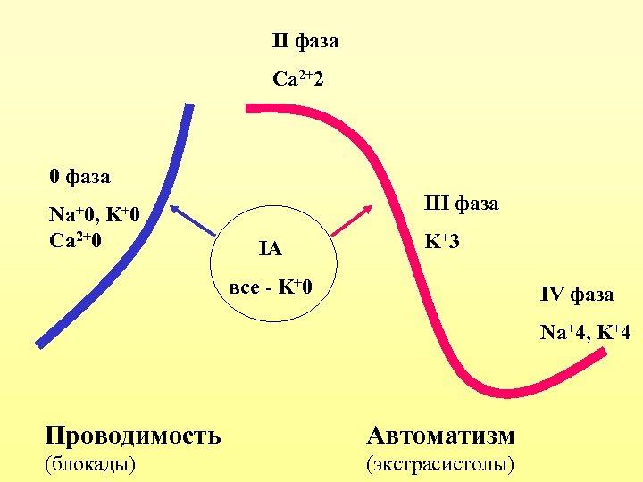 II фаза Ca 2+2 0 фаза Na+0, III фаза K +0 Ca 2+0 IA