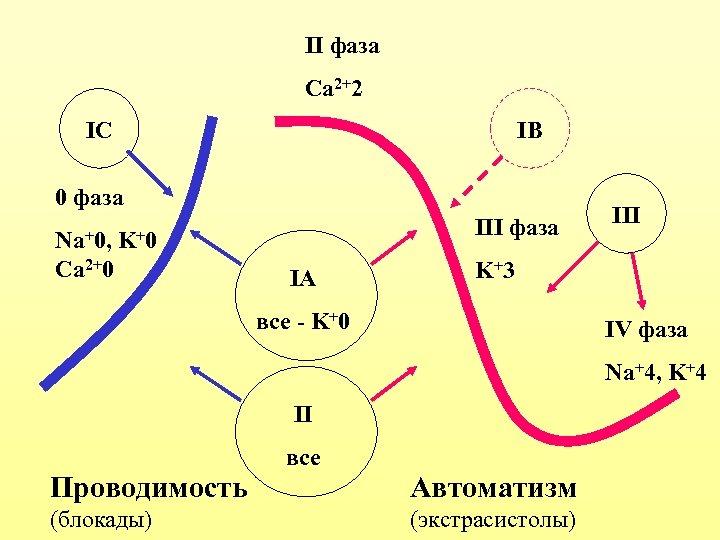II фаза Ca 2+2 IС IВ 0 фаза Na+0, K+0 Ca 2+0 III фаза