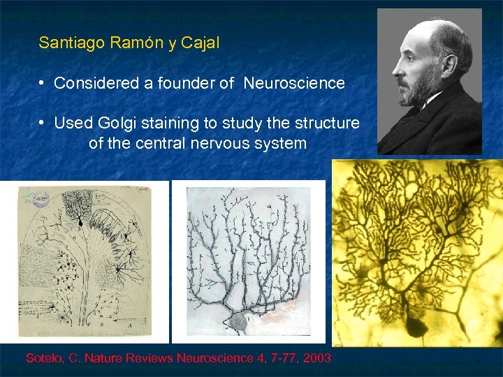 Santiago Ramón y Cajal • Considered a founder of Neuroscience • Used Golgi staining