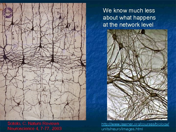 We know much less about what happens at the network level Sotelo, C. Nature