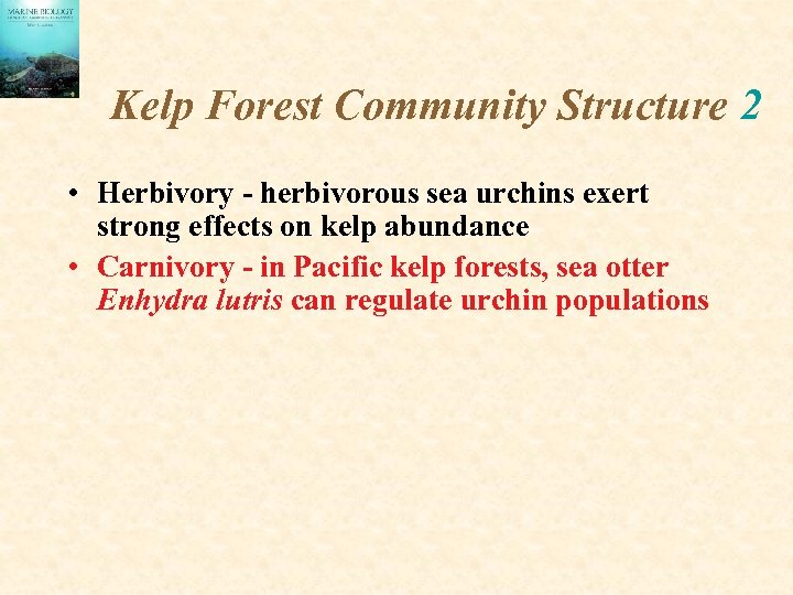 Kelp Forest Community Structure 2 • Herbivory - herbivorous sea urchins exert strong effects