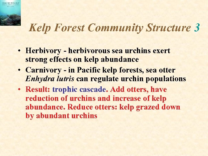 Kelp Forest Community Structure 3 • Herbivory - herbivorous sea urchins exert strong effects