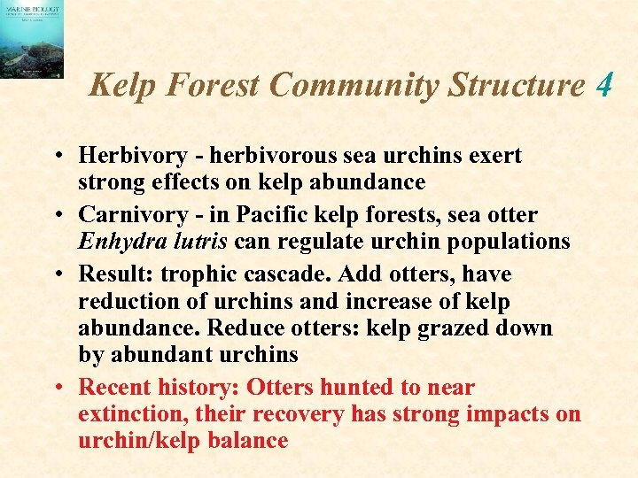 Kelp Forest Community Structure 4 • Herbivory - herbivorous sea urchins exert strong effects