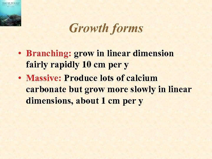 Growth forms • Branching: grow in linear dimension fairly rapidly 10 cm per y