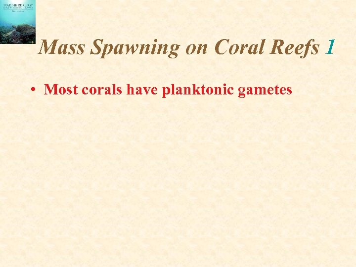 Mass Spawning on Coral Reefs 1 • Most corals have planktonic gametes