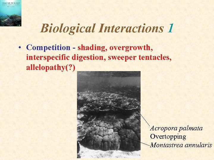 Biological Interactions 1 • Competition - shading, overgrowth, interspecific digestion, sweeper tentacles, allelopathy(? )