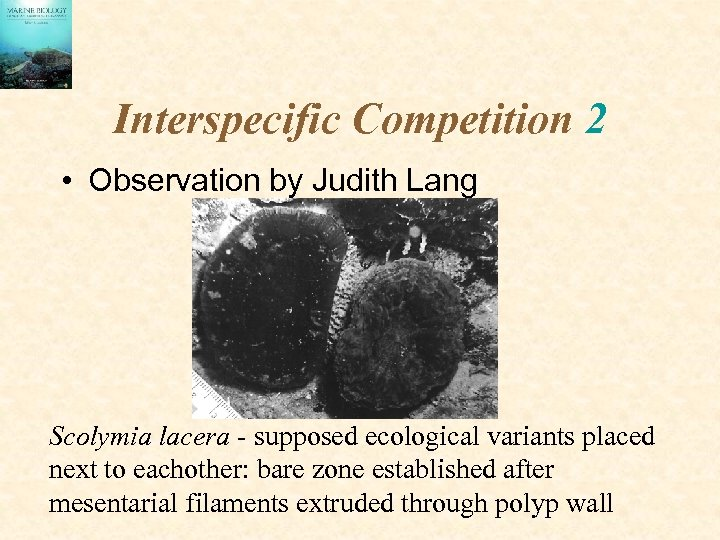 Interspecific Competition 2 • Observation by Judith Lang Scolymia lacera - supposed ecological variants