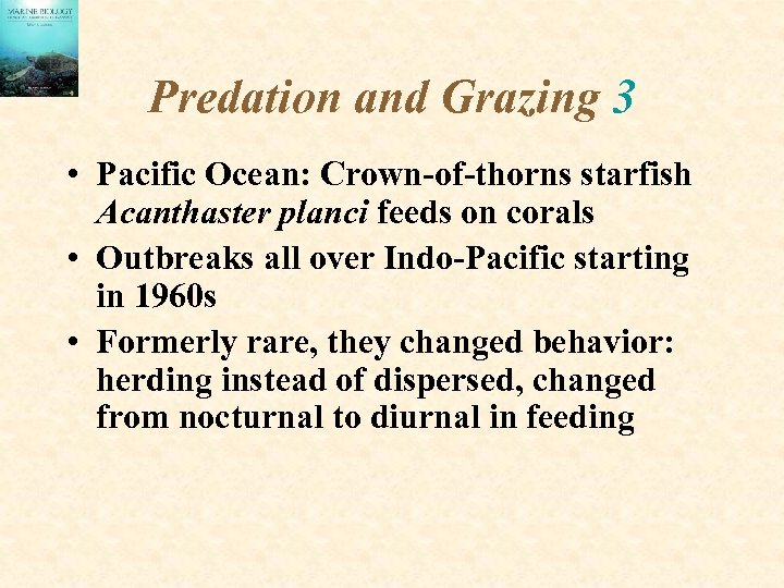 Predation and Grazing 3 • Pacific Ocean: Crown-of-thorns starfish Acanthaster planci feeds on corals