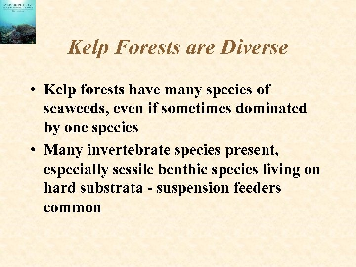 Kelp Forests are Diverse • Kelp forests have many species of seaweeds, even if