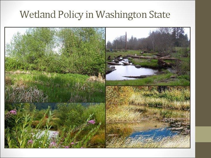 Wetland Policy in Washington State