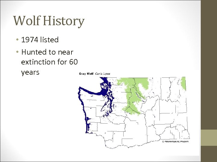 Wolf History • 1974 listed • Hunted to near extinction for 60 years