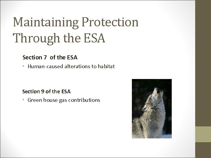 Maintaining Protection Through the ESA Section 7 of the ESA • Human-caused alterations to