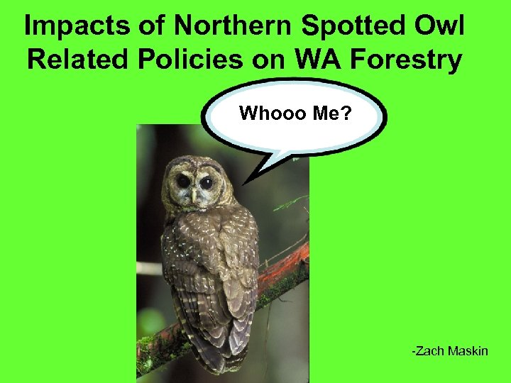 Impacts of Northern Spotted Owl Related Policies on WA Forestry Whooo Me? -Zach Maskin