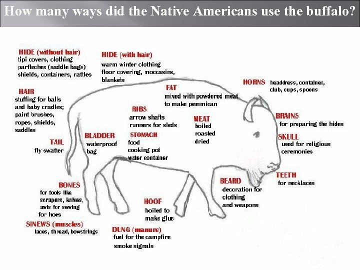 How many ways did the Native Americans use the buffalo?