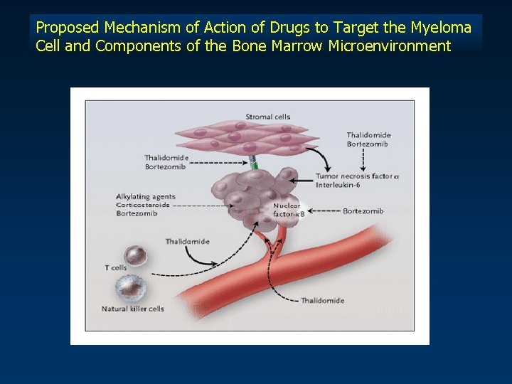 Proposed Mechanism of Action of Drugs to Target the Myeloma Cell and Components of