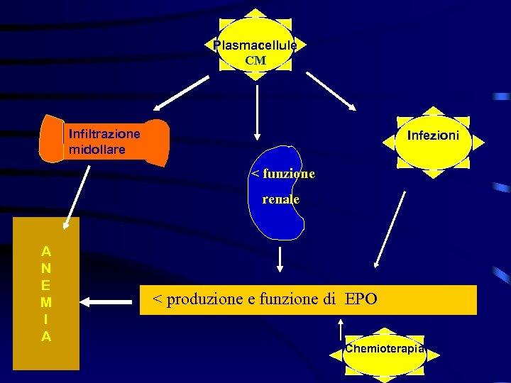 Plasmacellule CM Infiltrazione midollare Infezioni < funzione renale A N E M I A