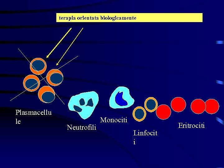 terapia orientata biologicamente Plasmacellu le Neutrofili Monociti Linfocit i Eritrociti