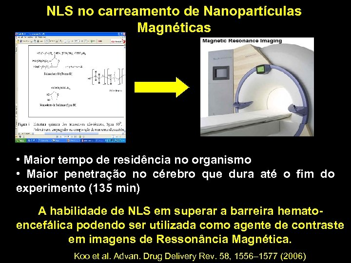 NLS no carreamento de Nanopartículas Magnéticas • Maior tempo de residência no organismo •