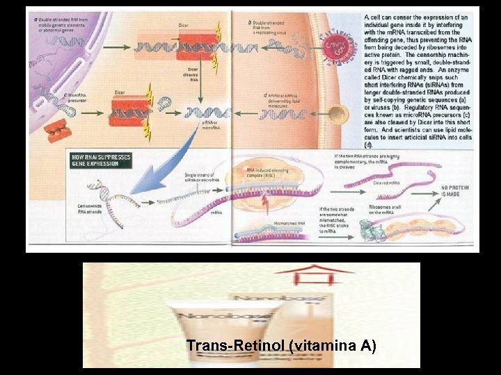 Trans-Retinol (vitamina A)
